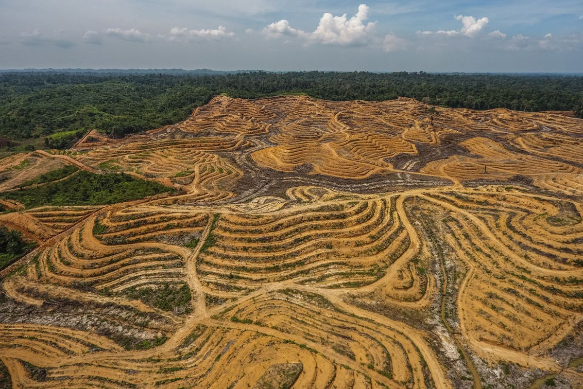 An illegal palm oil plantation seen inside the boundary of the Gunung Leuser National Park in Aceh, Indonesia, on June 6, 2018.