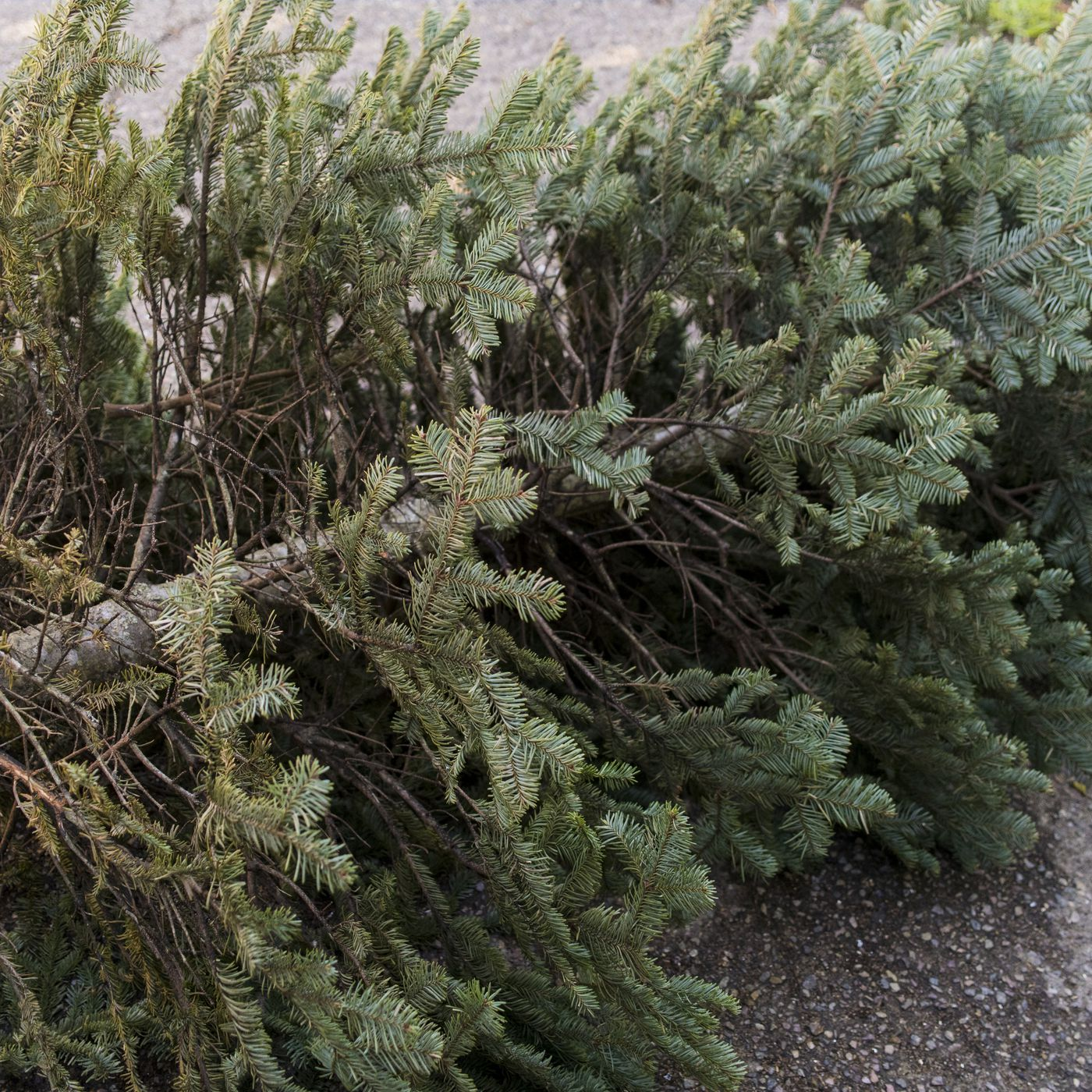 How to get rid of your Christmas tree in Austin - Curbed Austin