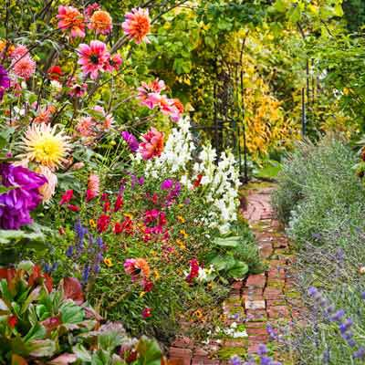 Vibrant Blooming Plants For A Late Summer Garden This Old House,Chocolate Brown Chestnut Brown Hair Color Male