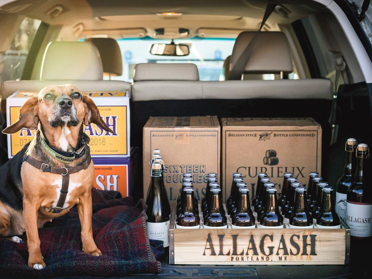 Take A Road Trip To These Dog Friendly New England Breweries Eater