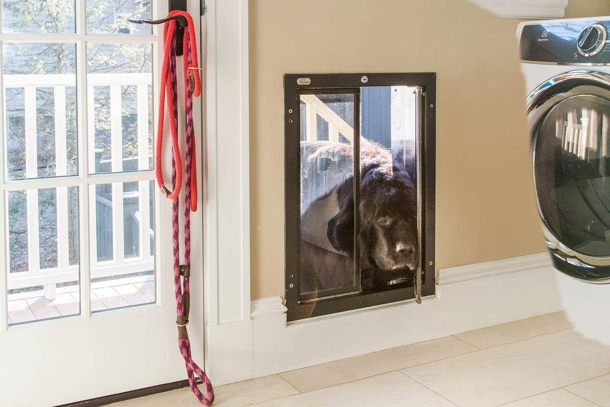 Dog entering the laundry room through the doggy door.