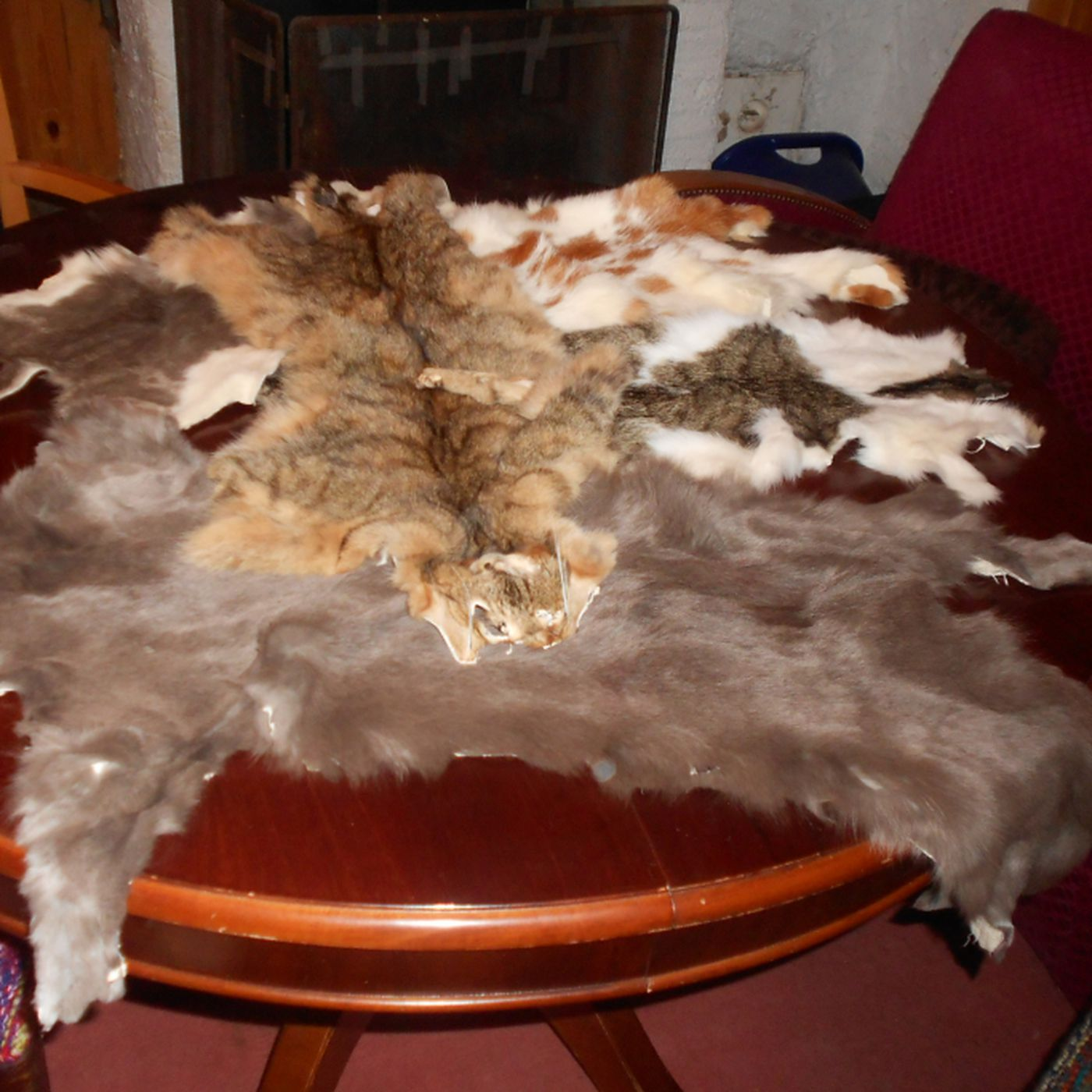 Excellent Purr Trade Switzerland Struggles With A Black Market In Ncnpc Chair Design For Home Ncnpcorg