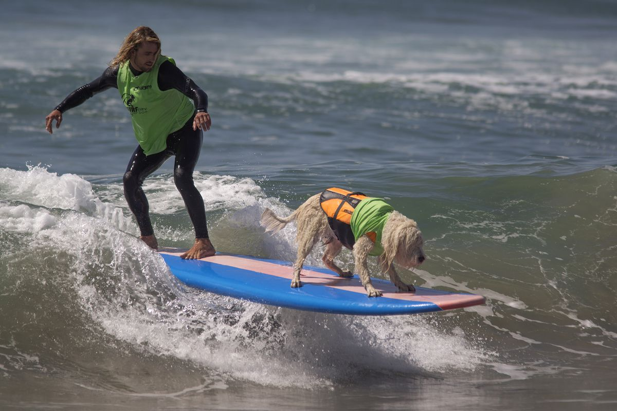 Hounds Hang Ten At Annual Dog Surfing Competition