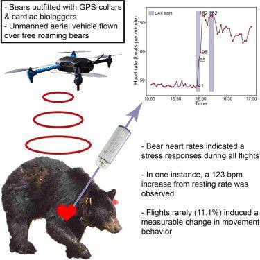bear drone
