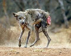 richardsoncoyote