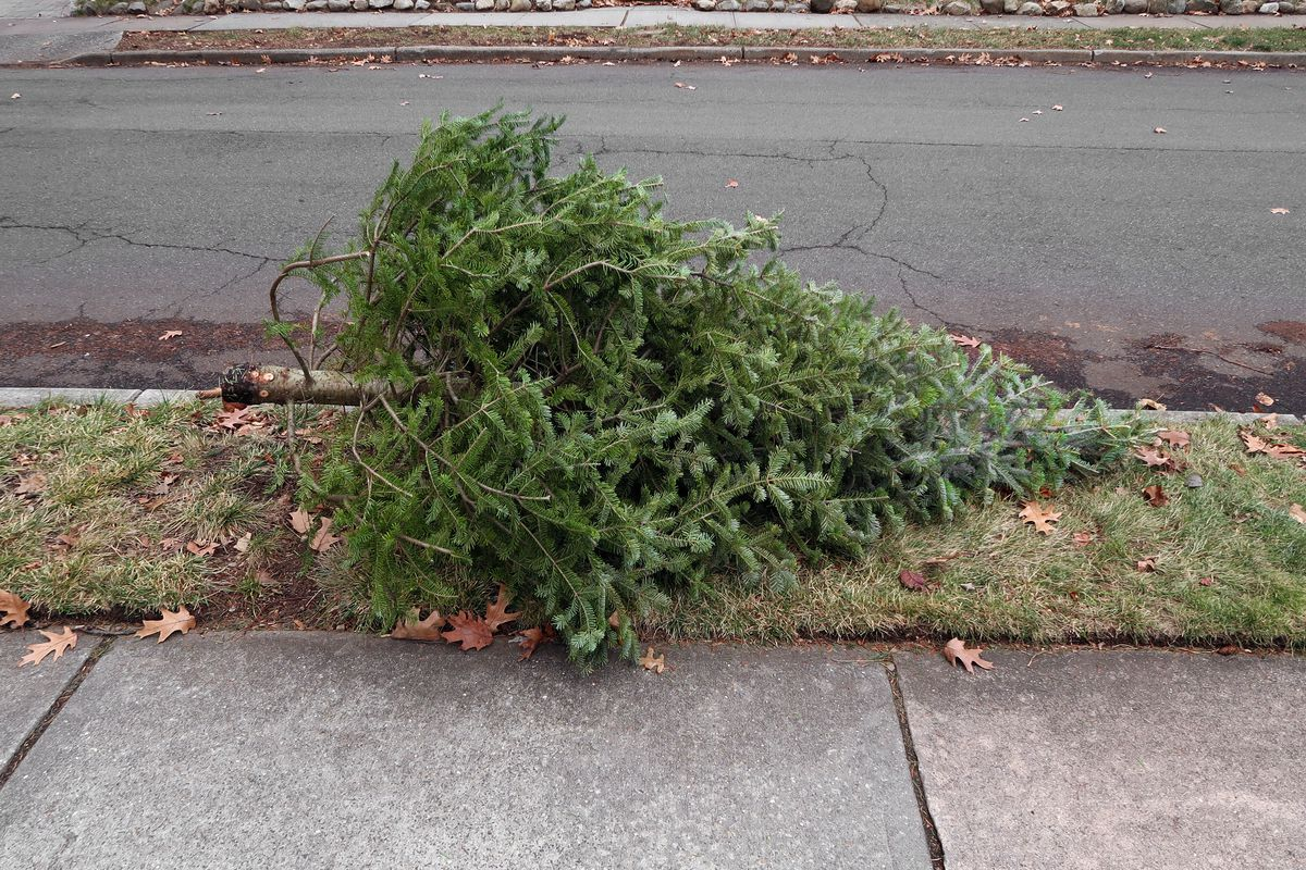 Christmas Tree Disposal.How To Dispose Of Your Old Christmas Tree In Nyc Curbed Ny