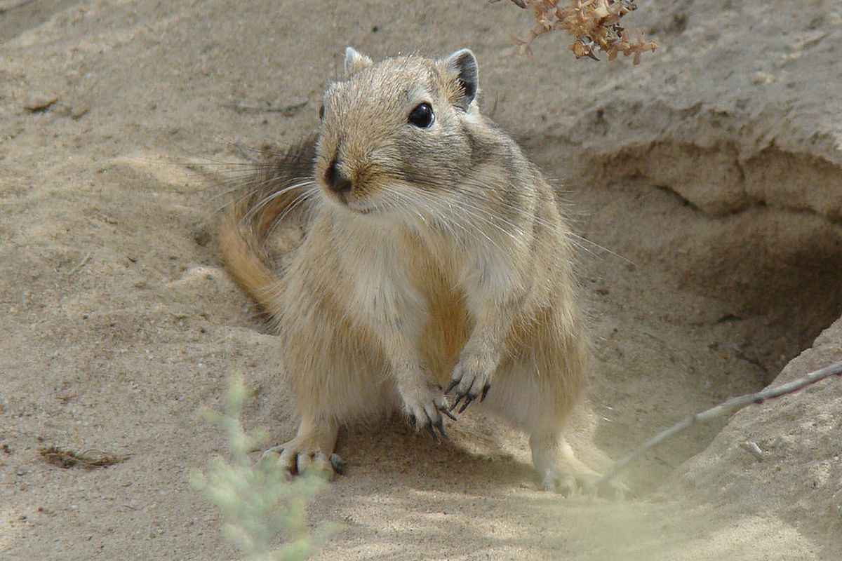 I would have gotten away with it too if not for you meddling kids. (Great gerbil, Baikonur-town, Kazakhstan.)