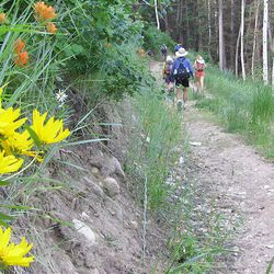 4. Wildflowers grow along the service road to the Honeycomb Return chairlift.