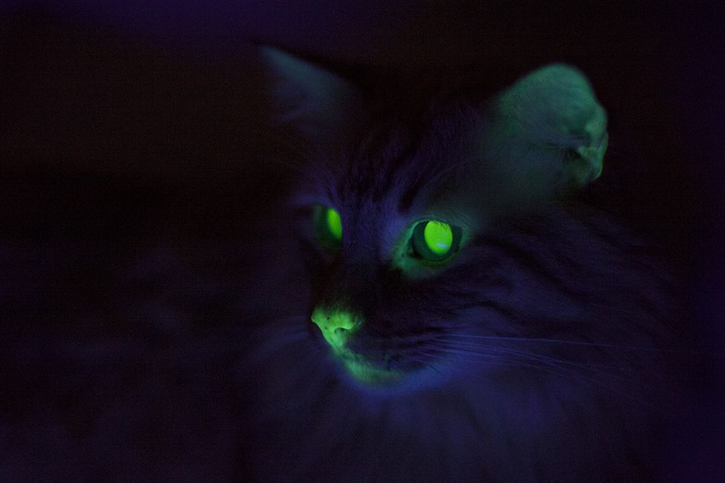 Where cats glow green: weird feline science in New Orleans ...