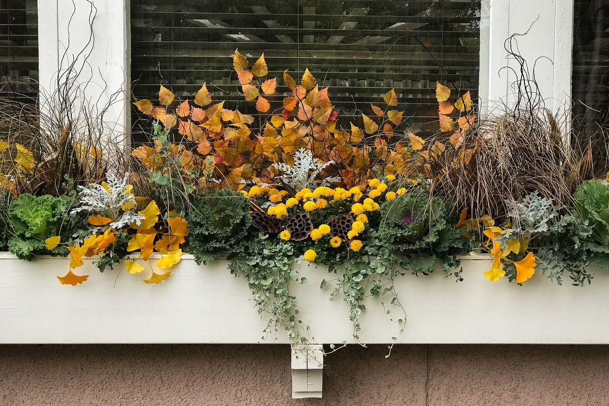 Window box with fall flowers and plants.