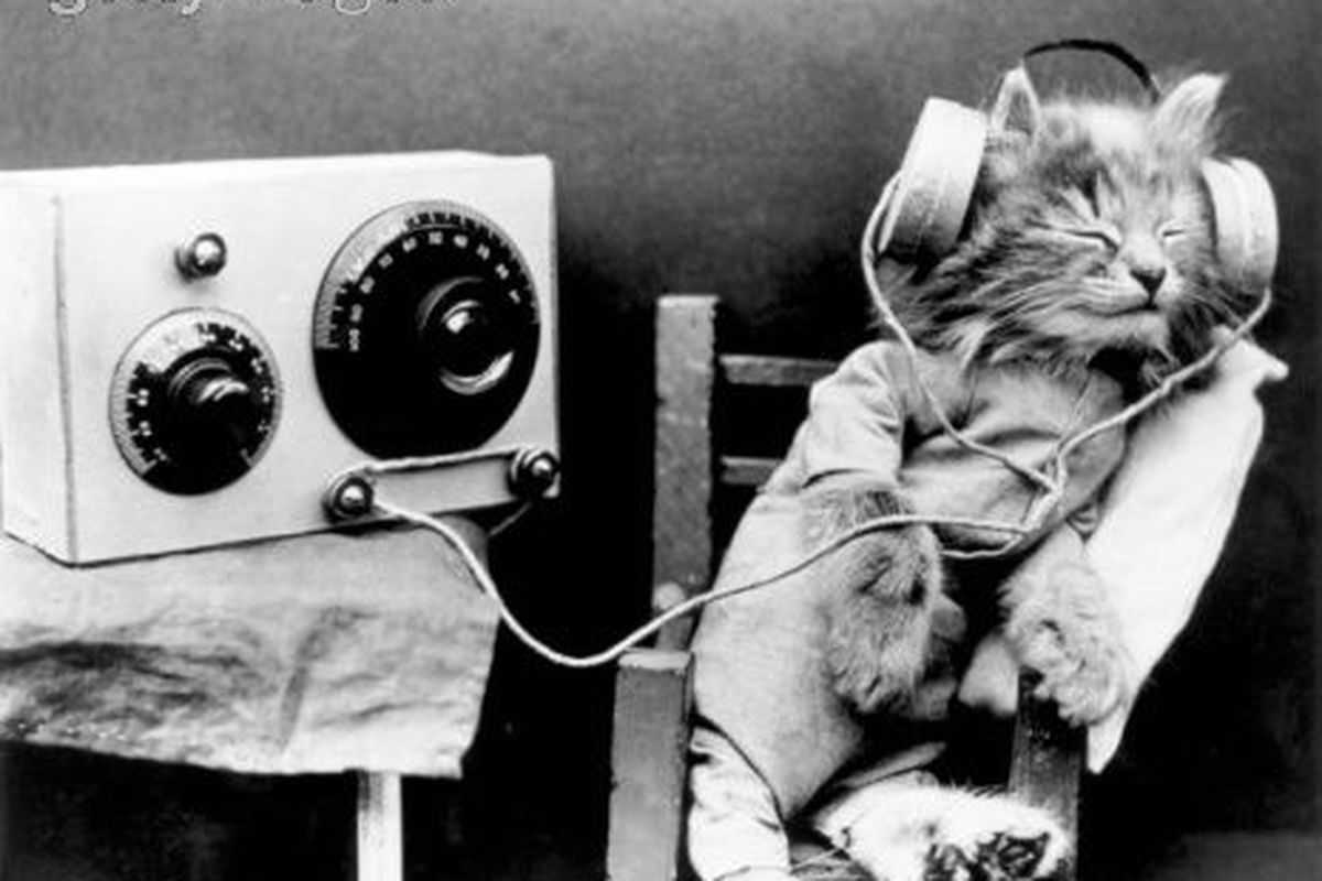 radiocat01