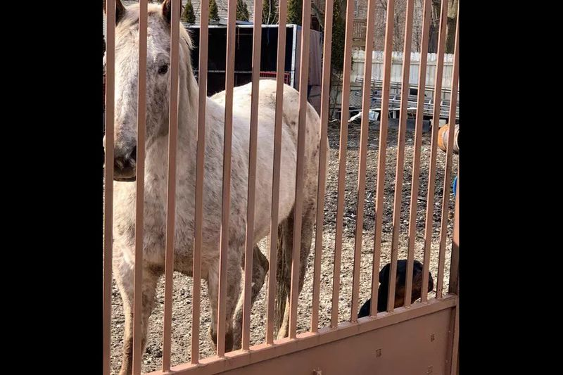Two horses, including a dead one, were found in a yard in the 1000 block of West 61st Street in Englewood.