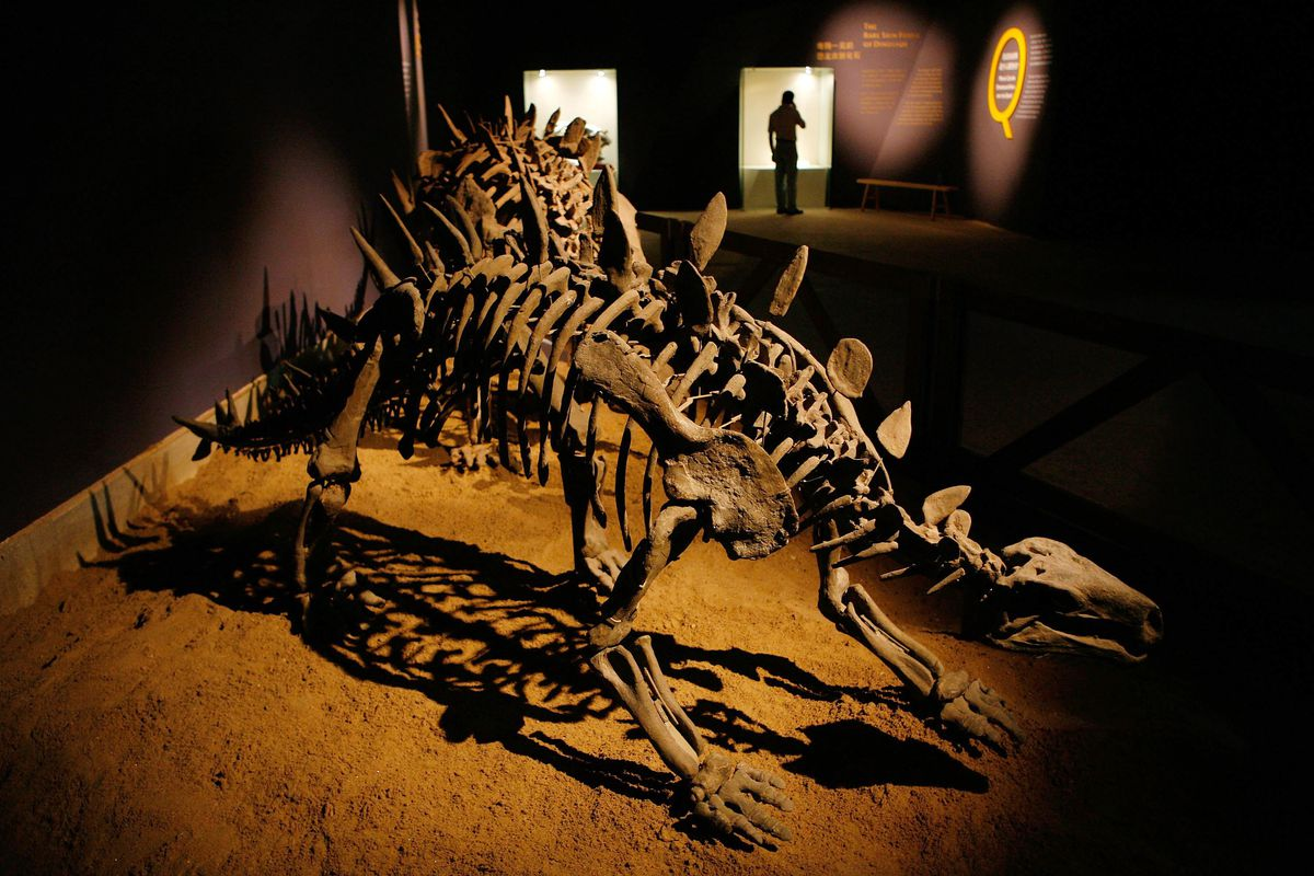 Sichuan Province Zigong Dinosaur Fossil Exhibition To Be Held at Shanghai