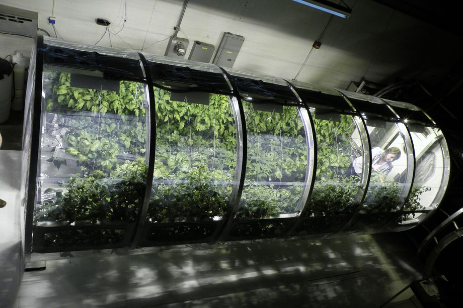 space_greenhouse_nasa_lunar_mars_university_arizona_2.0.jpg