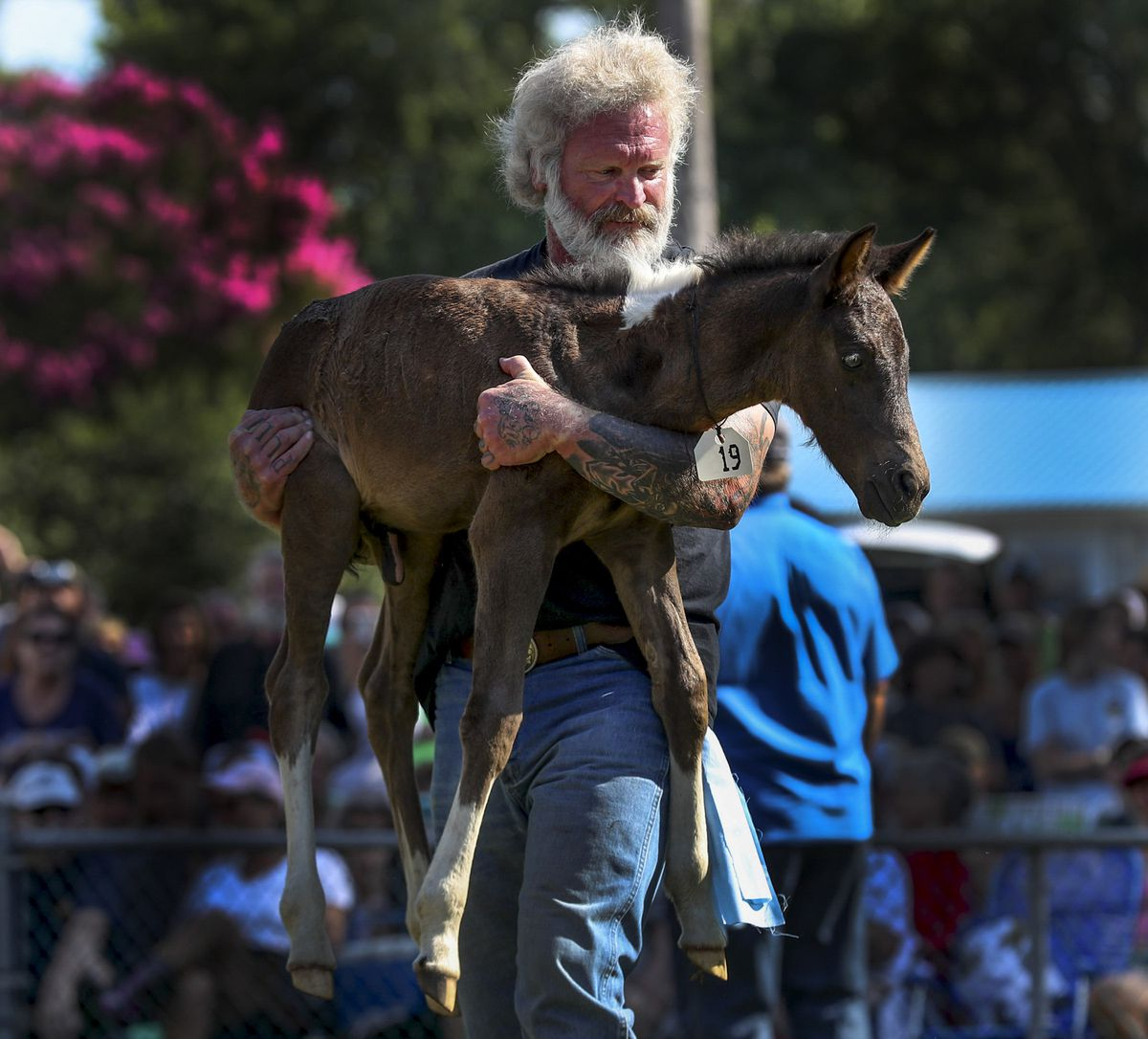 Volunteer Salt Water Cowboy Ellis Savage carries a wild pony foal around the auction ring during Pony Penning at the fairgrounds in Chincoteague, Va., on Thursday, July 25, 2019. Jessica Stewart bought the 6-week-old black foal for $10,000.