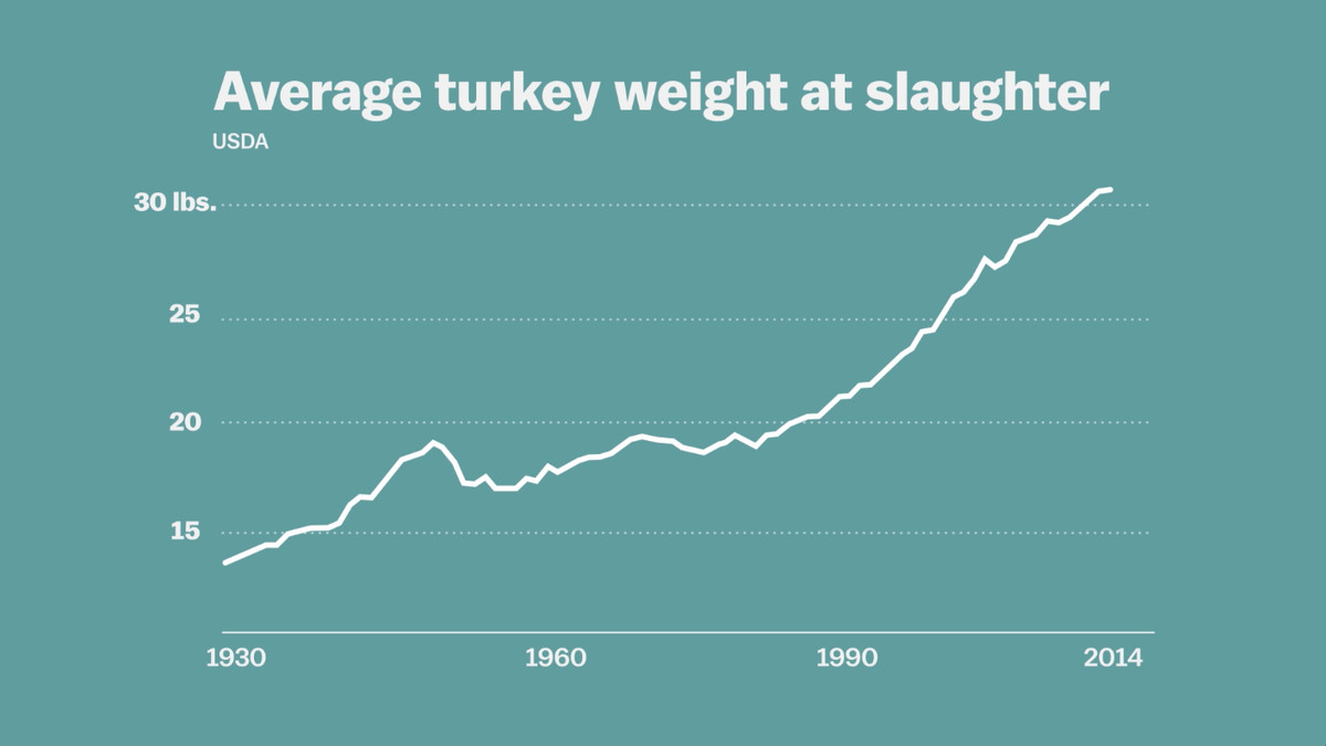 The average turkey has more than doubled in size since 1929.