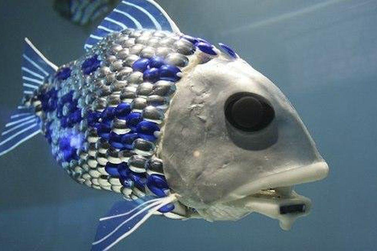 """via <a href=""""http://l3.yimg.com/bt/api/res/1.2/sBdegQ3jt_NrOjPXVPzs5w--/YXBwaWQ9eW5ld3M7cT04NTt3PTYzMA--/http://media.zenfs.com/en/blogs/technews/mw-630-schoal-fish-630w.jpg"""">l3.yimg.com</a>"""