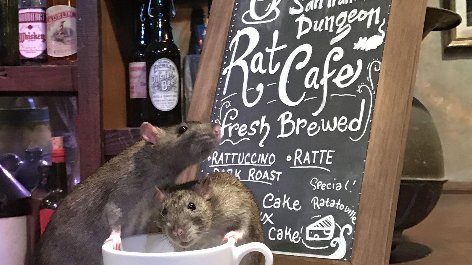 The Rat Cafe San Francisco
