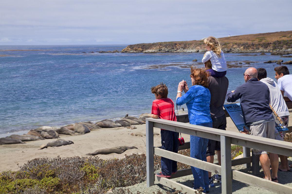 Tourists watching Elephant Seals, Piedras Blancas, San Simeon, San Luis Obispo County, California