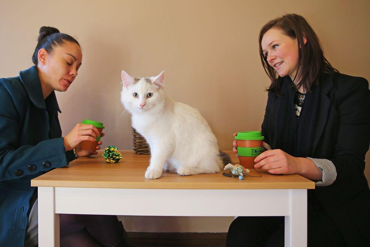 Scene from a cat cafe in Melbourne, Australia