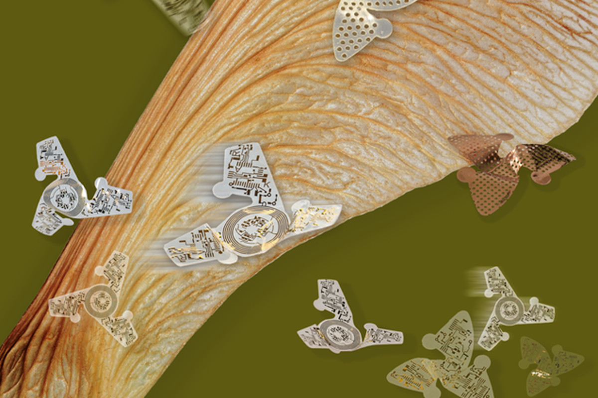 """""""Microfliers"""" developed by Northwestern University scientists show against a sycamore seed."""