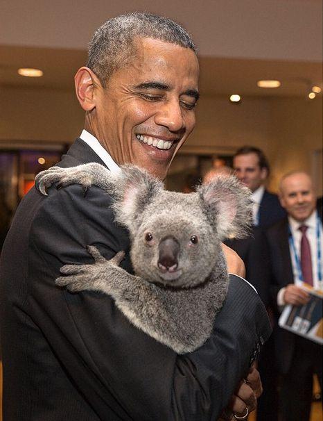 pbama koala