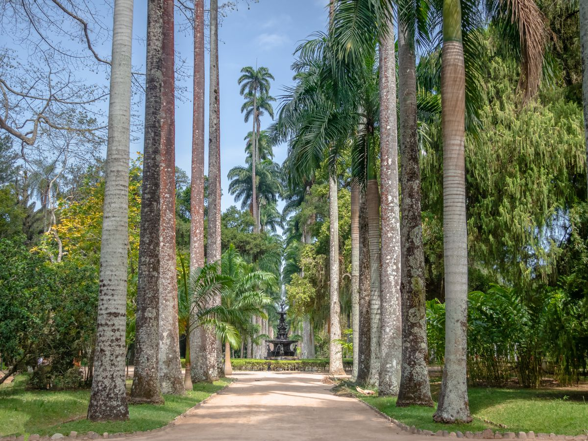 A path in the Rio de Janeiro Botanical Garden. The path is surrounded by tall trees.