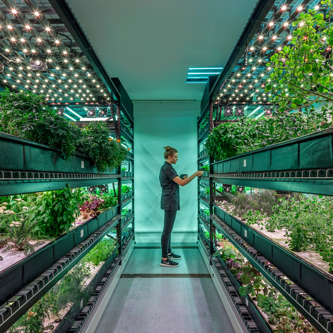 Can Vertical Farming Disrupt The Agriculture Industry Eater