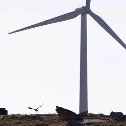 A golden eagle flies near a wind turbine on a wind farm owned by PacifiCorp near Glenrock, Wyo., Monday, May 6, 2013.  At least 20 golden eagles have been found dead at the companies wind farms in Wyoming, according to data obtained by The Associated Press. It's the not-so-green secret of the nation's wind-energy boom: Spinning turbines are killing thousands of federally protected birds, including eagles, each year.