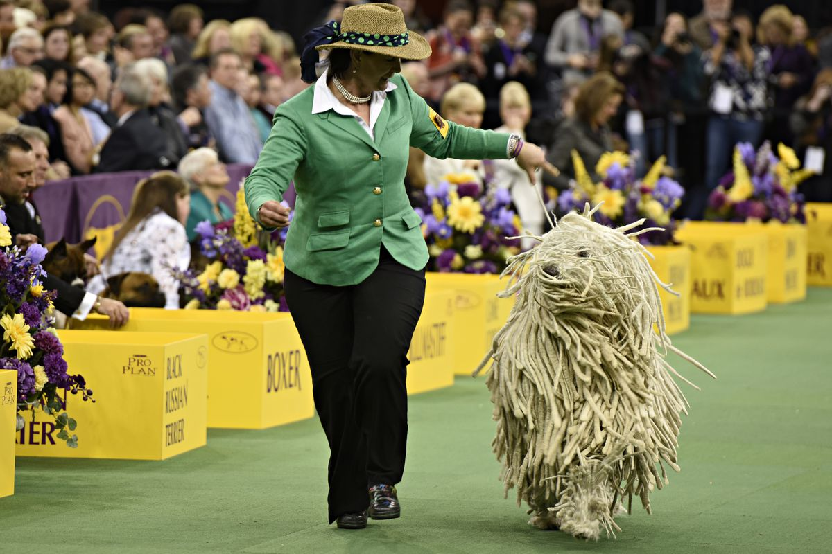 Westminster Dog Show 2020 Dates.The Strict Style Rules Of The Westminster Dog Show Racked