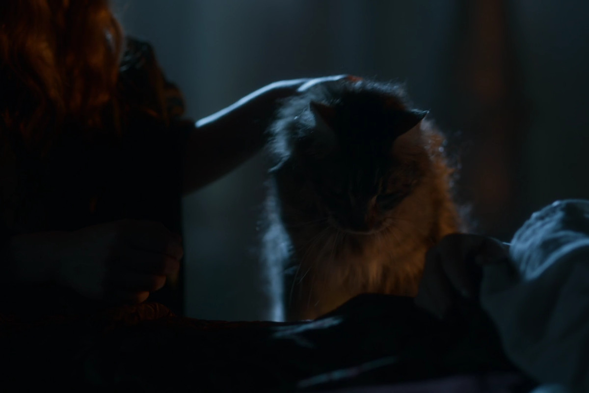 Game of Thrones 404 - Ser Pounce on Tommen's bed