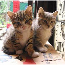 """Bodega kittens! Via <a href=""""www.flickr.com/photos/bmonzing/1254846203/in/pool-bodegacats/#/photos/bmonzing/1254846203/in/pool-893922@N22/"""" rel=""""nofollow"""">bmonzing</a>/Flickr<br />"""