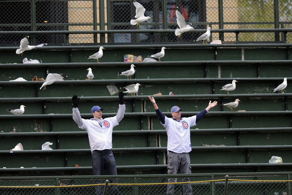 Cubs fans have shown the patience of Wrigley's rogue seagulls in recent years as the long wait for a North Side championship goes on. David Banks-US PRESSWIRE