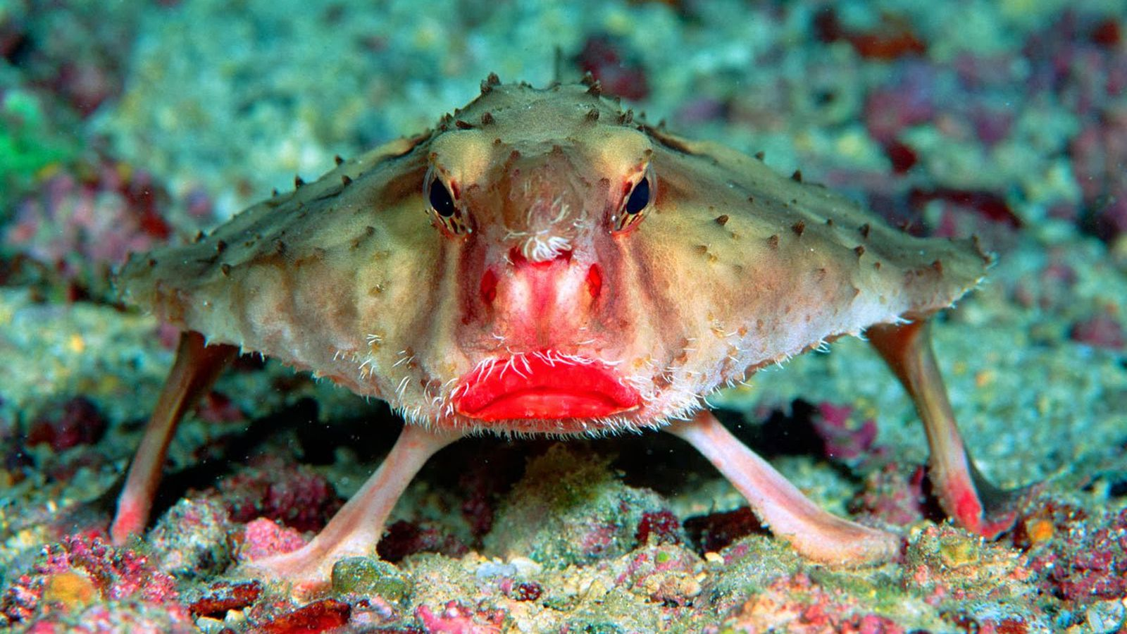 картинки прикол кто живет в океане обязательно