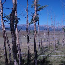 Drought-stressed forests in the southwestern United States.