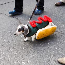 A hot damn dog in the Krewe of Barkus.
