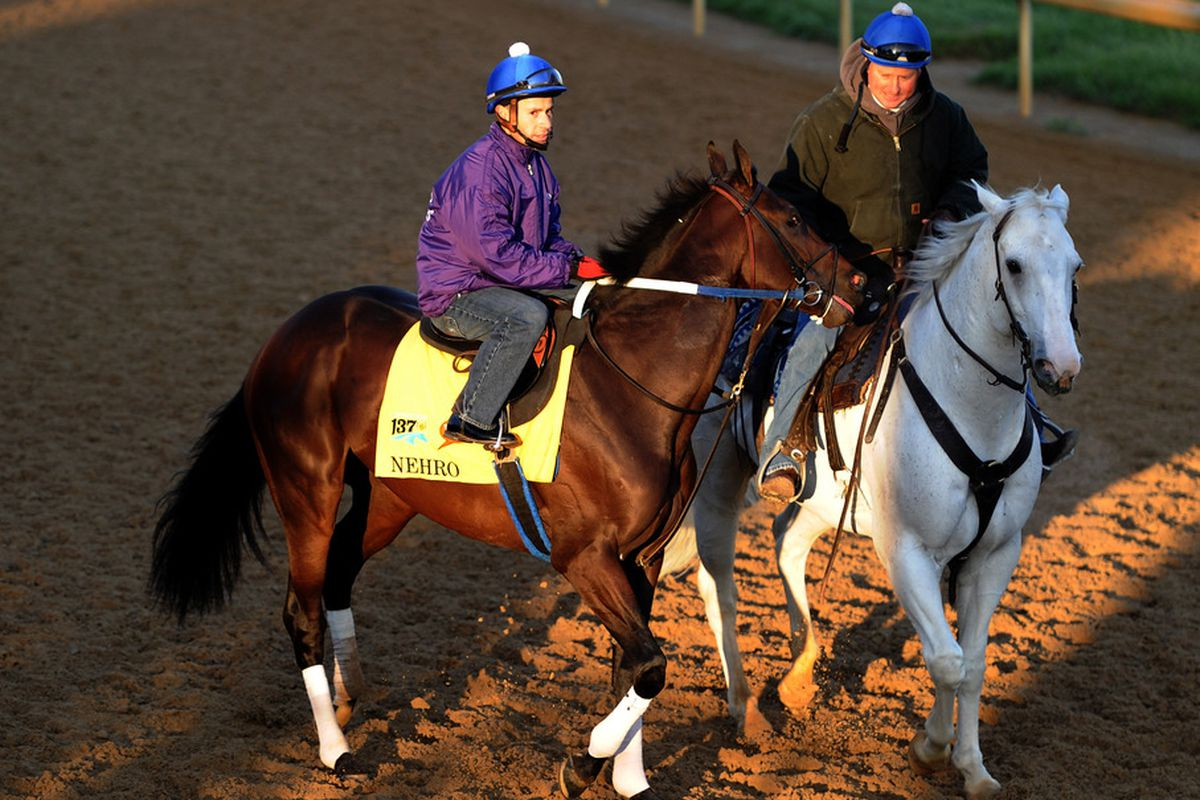 LOUISVILLE, KY - MAY 05:  Nehro is lead on to the track in preparation for the 137th Kentucky Derby at Churchill Downs on May 5, 2011 in Louisville, Kentucky.  (Photo by Harry How/Getty Images)