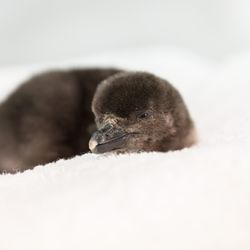 The first hatchling arrived on April 29, and the second hatched on May 5.