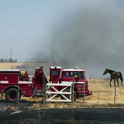 Firefighters with Placer County Fire Dept. Cal Fire checks on a grass fire burning near Creekwood Equestrian park in Placer County near Elverta, Calif., on Monday, July 27, 2015.