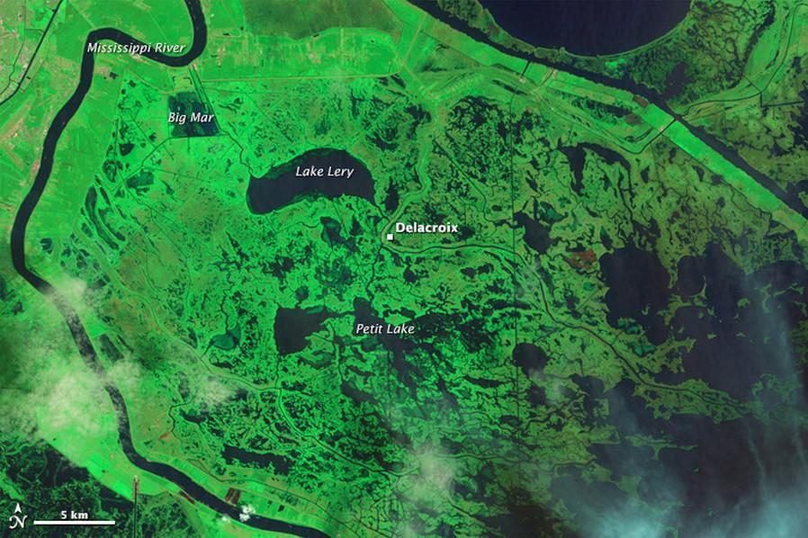 Swamp areas in Louisiana before Katrina hit.