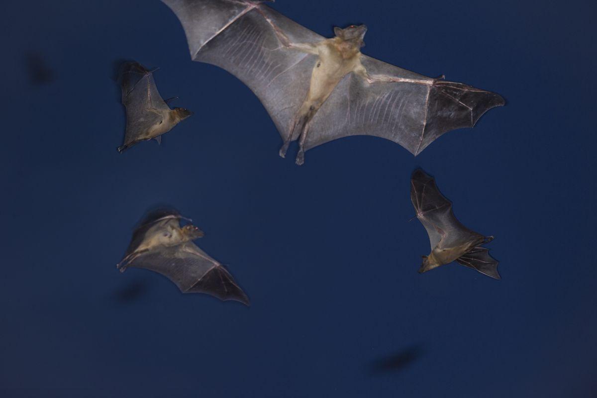 Annual Bat Migration