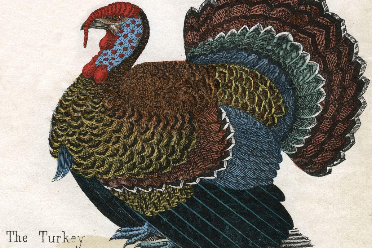 Antique Print Of A Turkey
