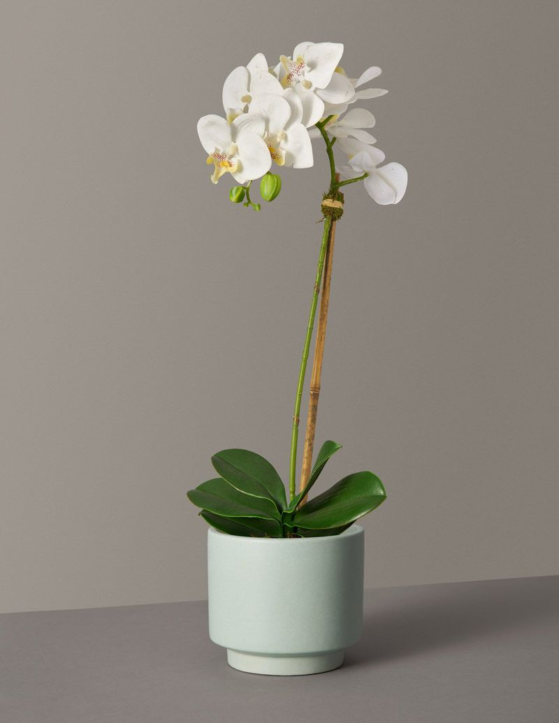Small mint planter with white orchid plant.