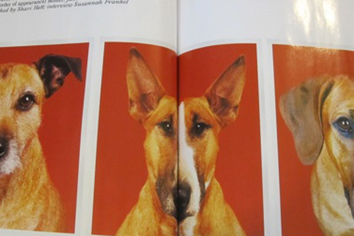 We just spent the last hour tearing our apartment apart looking for these images of McQueen's Dogs, which appeared in the winter-spring 2008-2009 issue of Arena Homme+. Photographs by Shari Hatt.