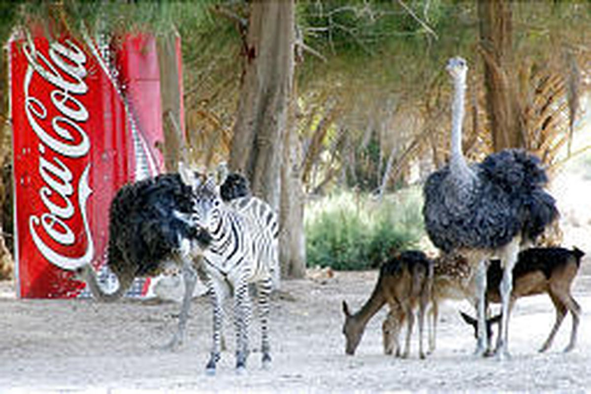 Zebras, gazelles and ostriches gather around a billboard at Africa Safari Park, just off a busy highway between Cairo and Alexandria in Egypt. The park was created to mimic the African veld to lure curious commuters traveling between the two major cities.