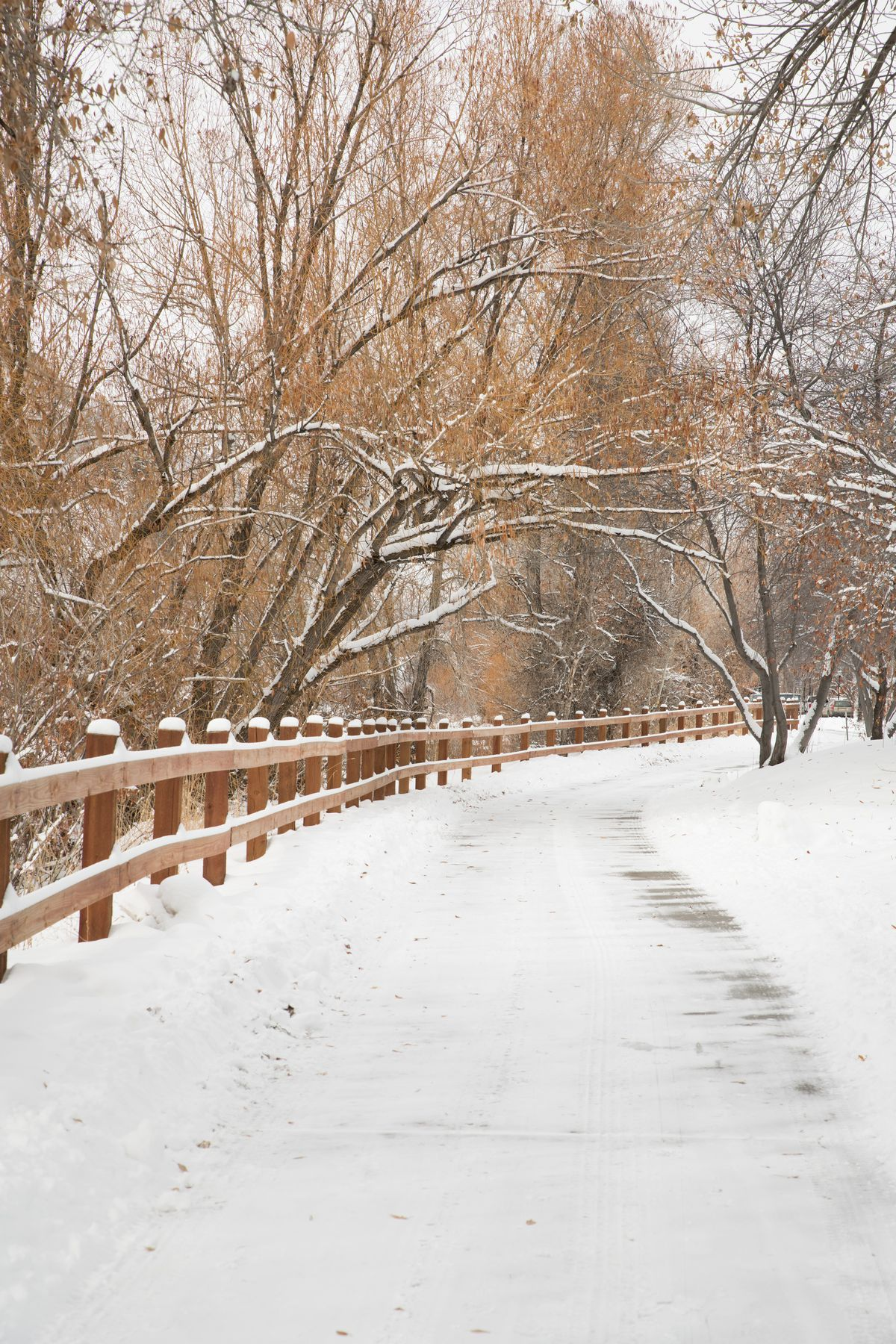A snowy path with a wooden fence and leave-less trees draped around it.