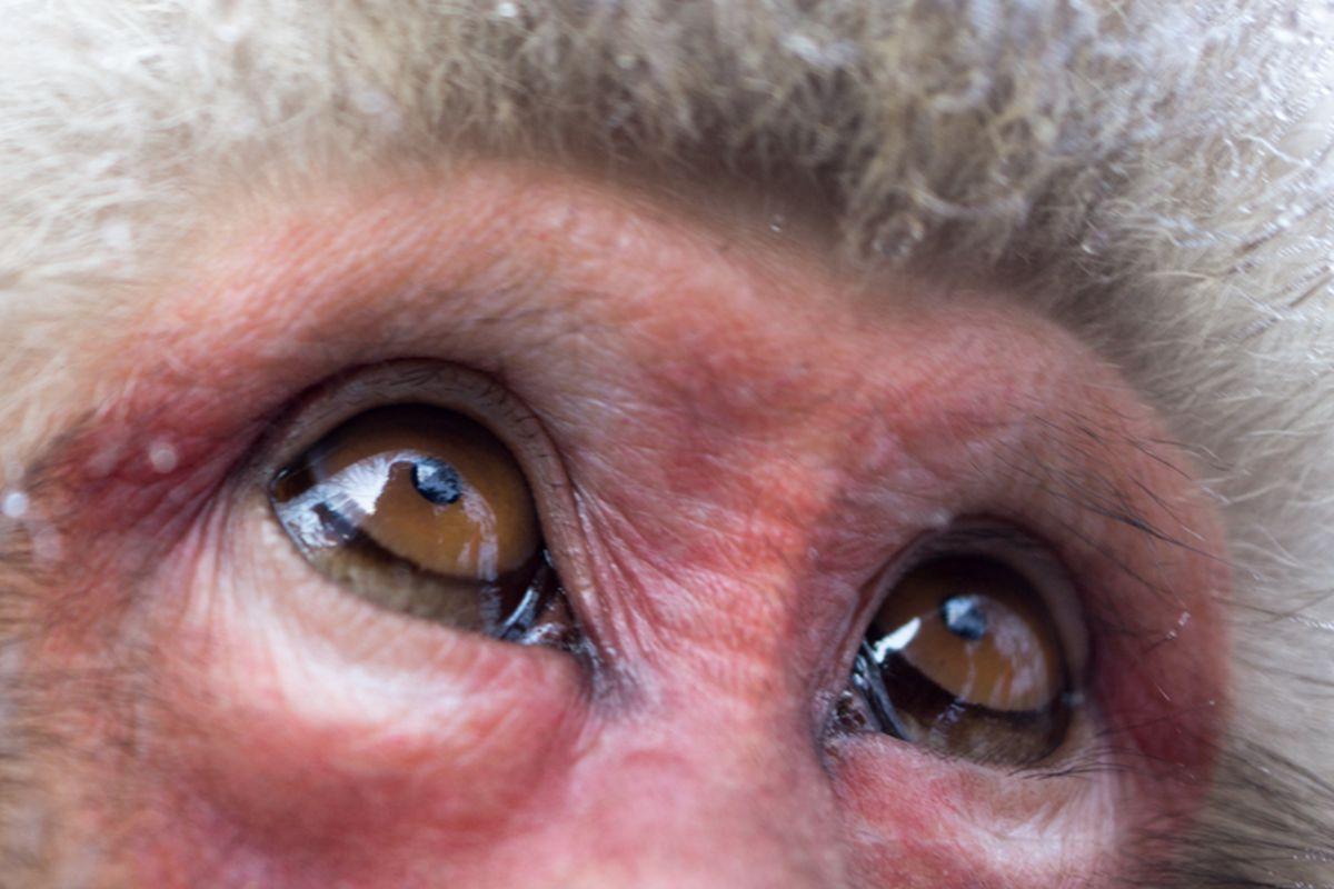 monkey eyes 800