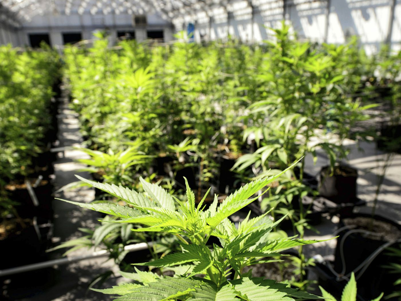 Legal recreational pot headed to approval in West Wendover