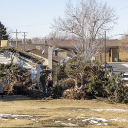 Two large pine trees that were felled by high winds in Lyle Bair's Washington Terrace yard are pictured on Tuesday, Jan. 19, 2021.One of the trees landed on Bair's home, damaging his carport, his car and other items.