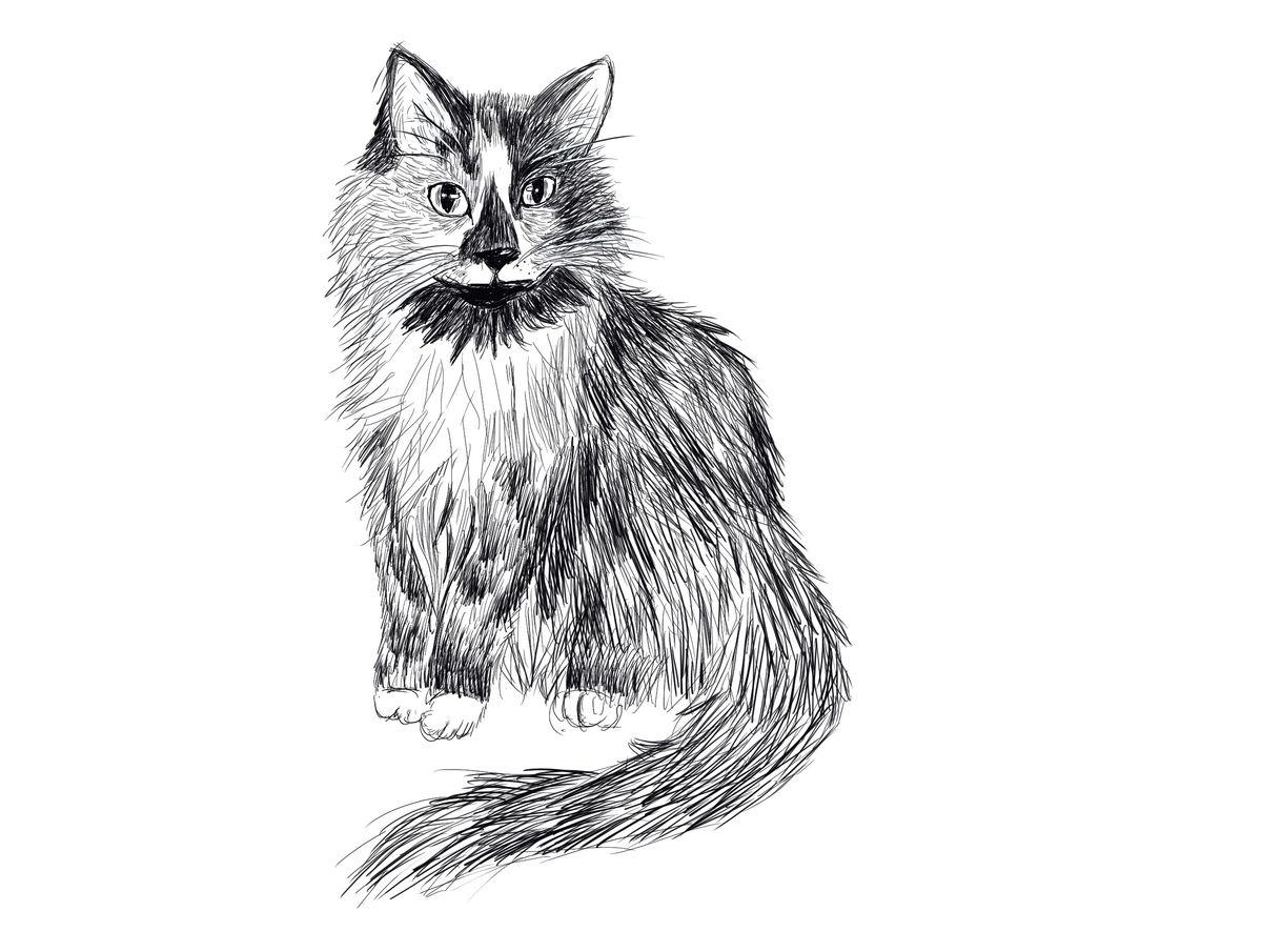 A cat, as drawn by Onjana Yawnghwe